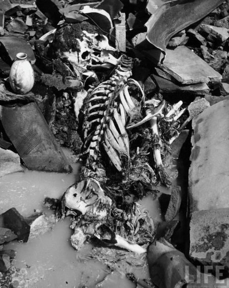 An obliterated corpse in Nagasaki
